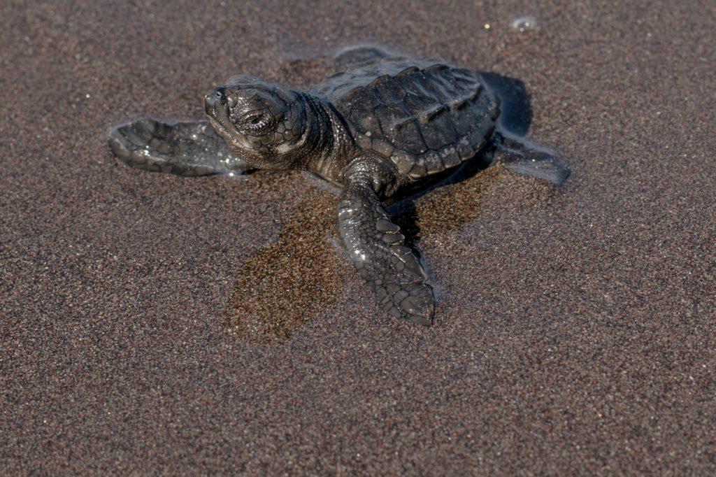 Le festival de la tortue de mer à Tulum