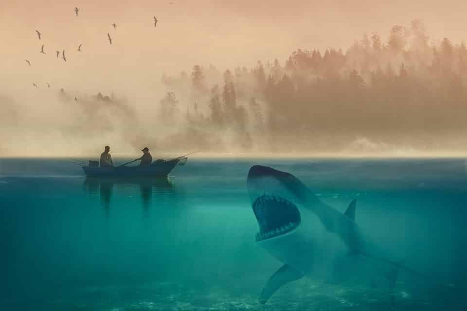 Requins au Mexique, risque et danger