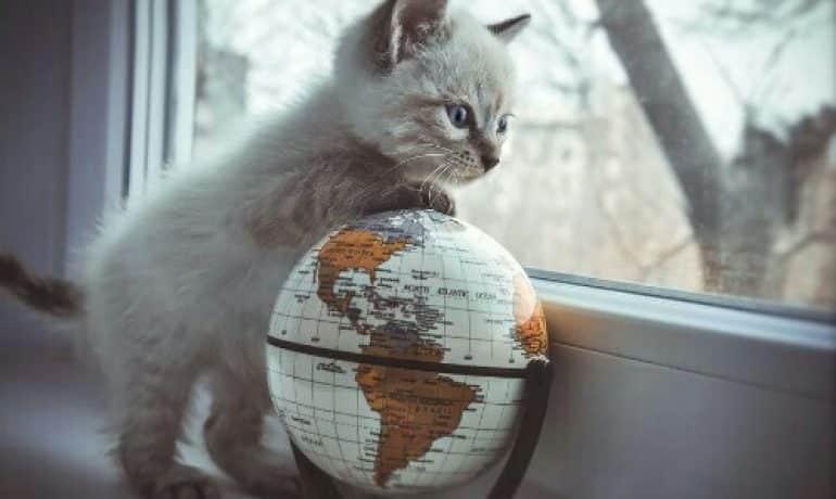 Comment voyager au Mexique avec son chat