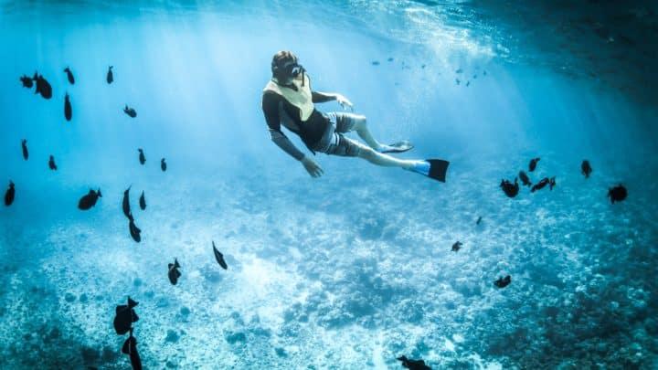 Plongée au Mexique : les 5 meilleurs spots
