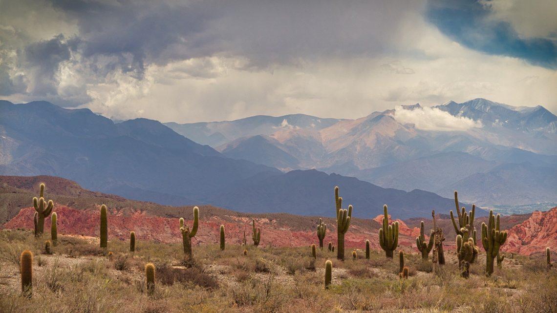 9 choses à savoir sur les Cactus du Mexique