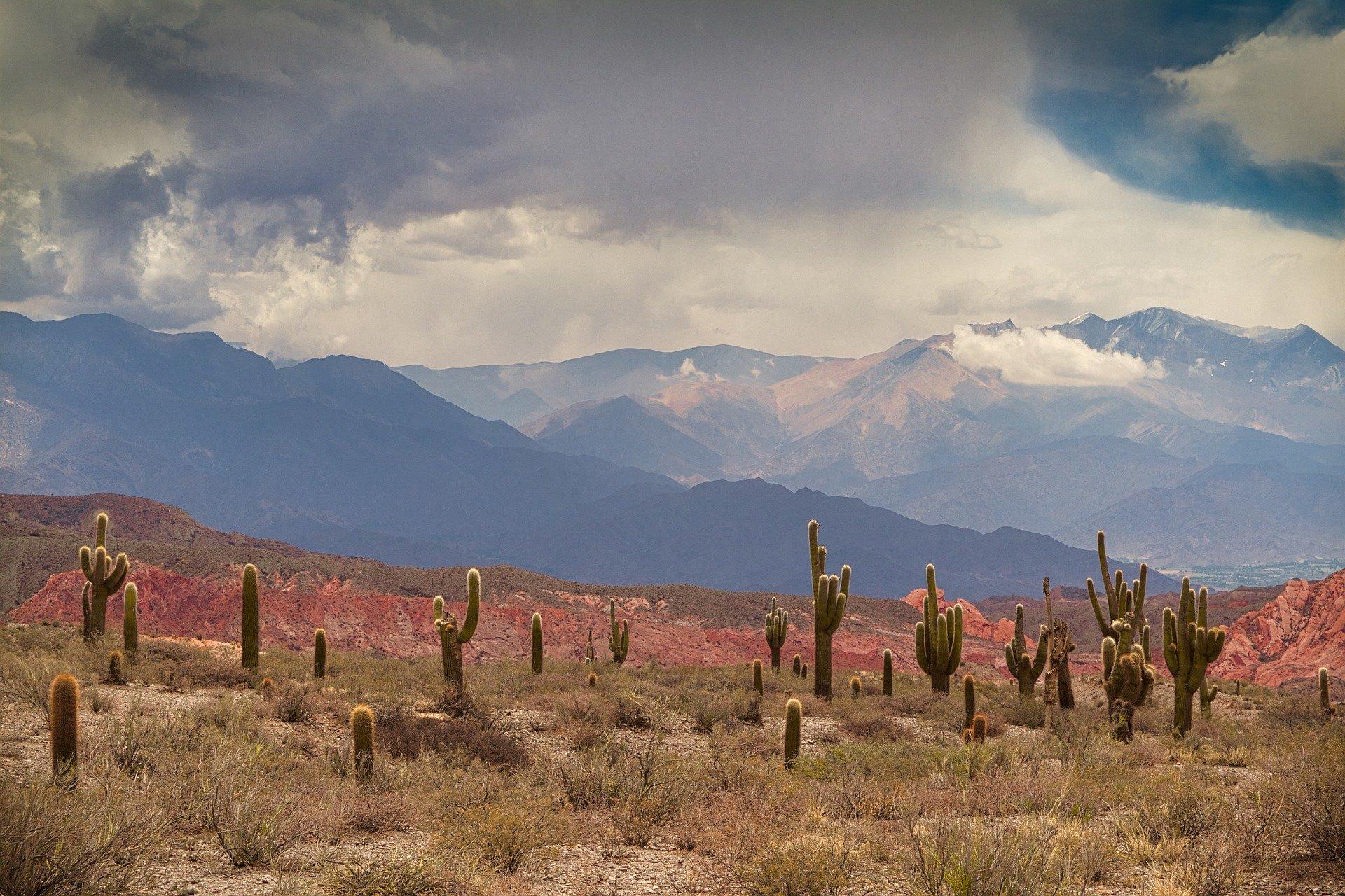 Cactus désert Mexique