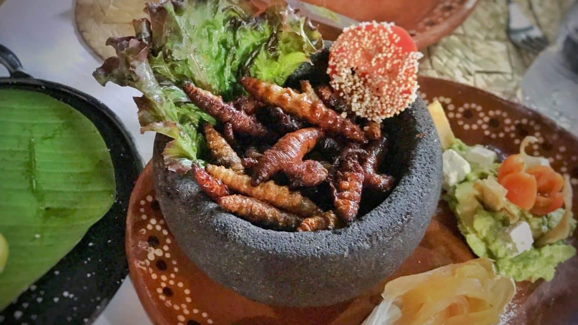 10 insectes comestibles au Mexique
