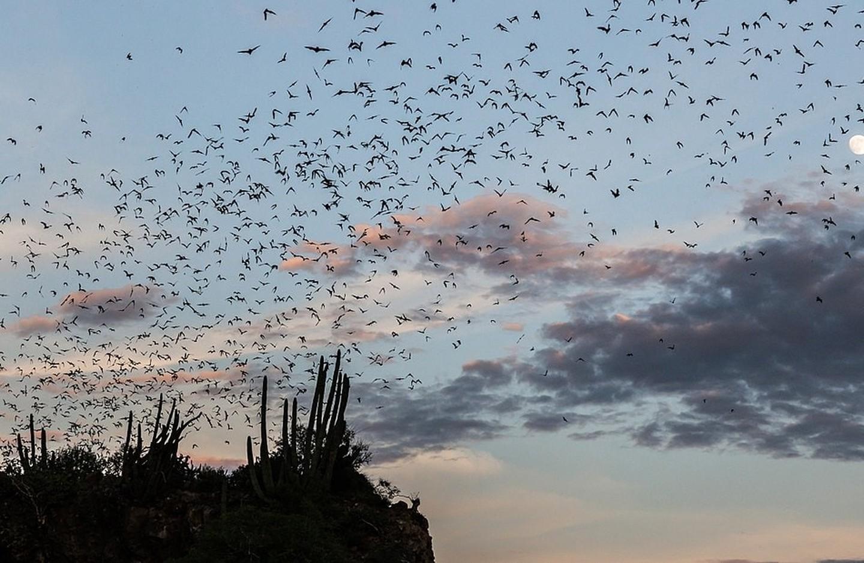 La grotte des chauves-souris