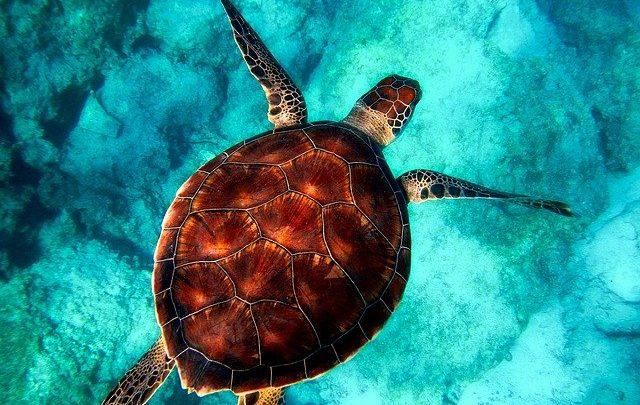 Akumal au Mexique – 10 choses à savoir pour préparer votre voyage