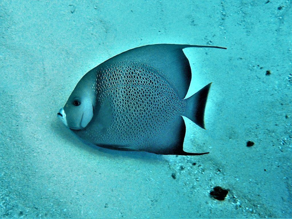 plongeur : Récif de corail / Cozumel