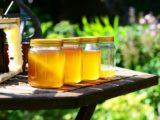 Le miel du Mexique - Yucatan - Cancun