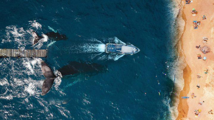 Les baleines au Mexique : où et quand les observer ?