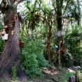 Isla de las Munecas
