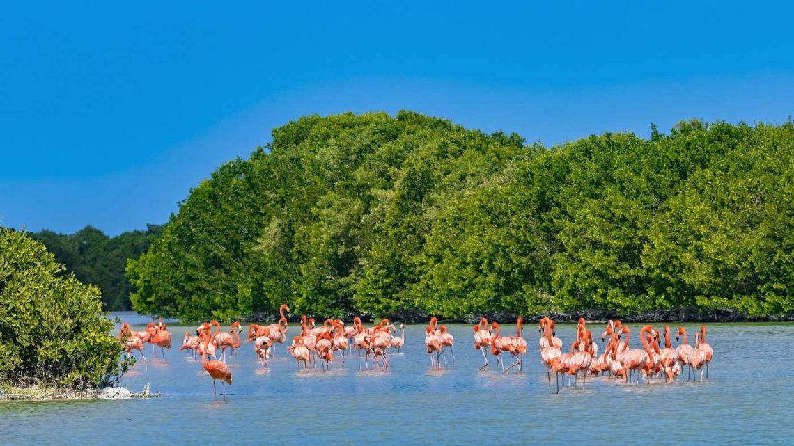 Partons à la découverte de la péninsule de Celestun dans le Yucatan