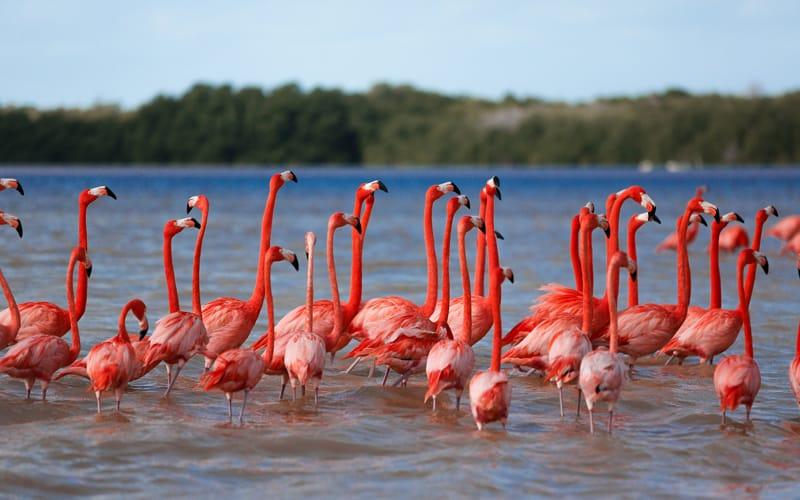 flamingos in Celestun.jpg