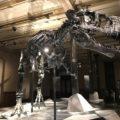 Où voir des fossiles de dinosaures au Mexique ?