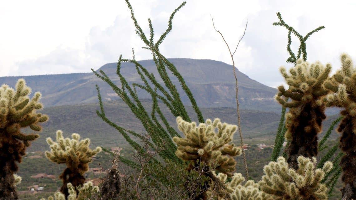 Les coyotes du Mexique   frontière Etats-Unis