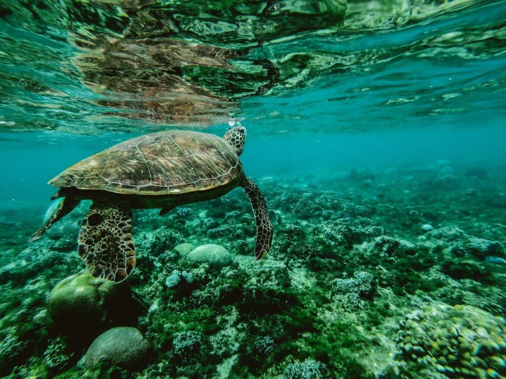 Observer les tortues à Akumal