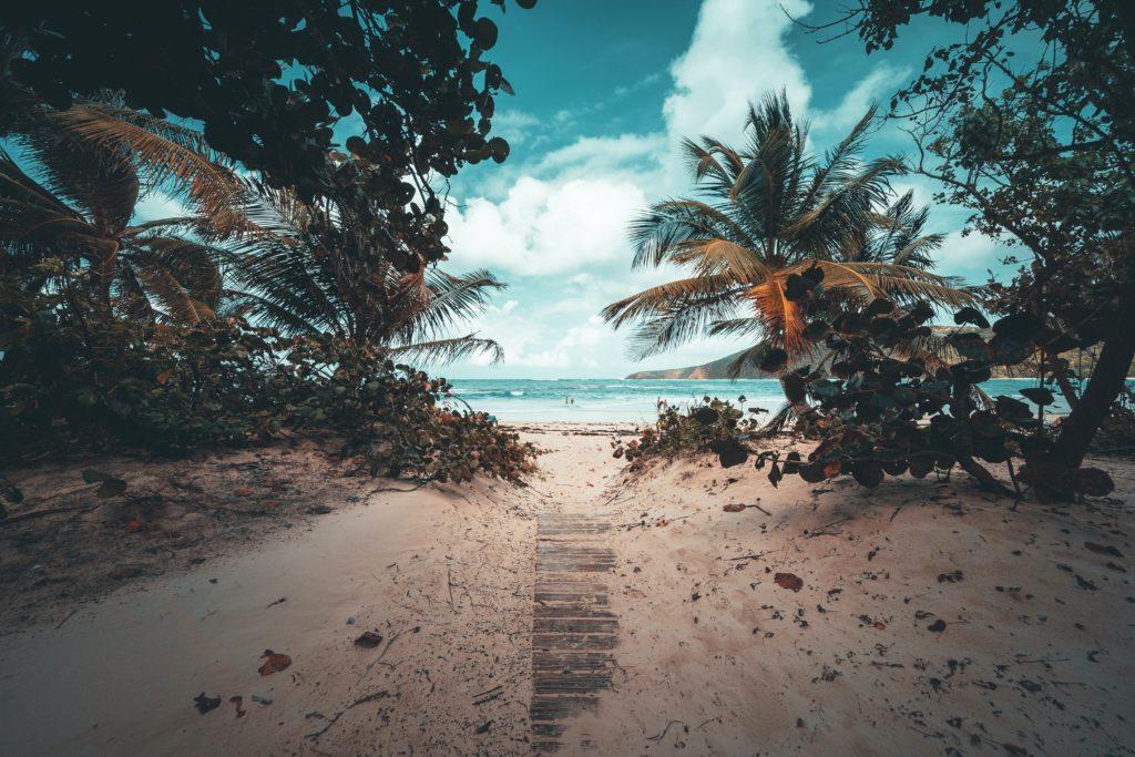 Palmiers Puerto Vallarta