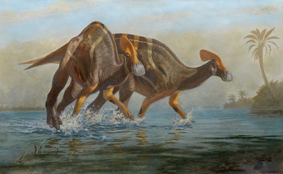 Une nouvelle espèce de dinosaure à crête identifiée au Mexique