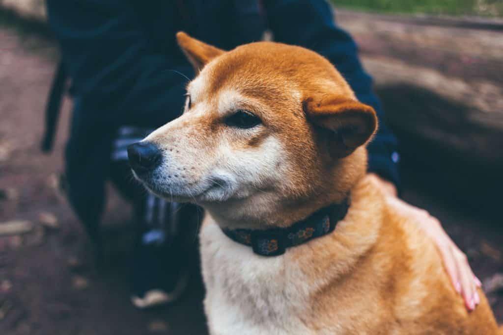 Choisir la bonne matière pour un collier de chien