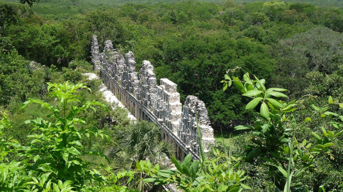 Ecosystème   Quel type de végétation trouve-t-on au Mexique ?