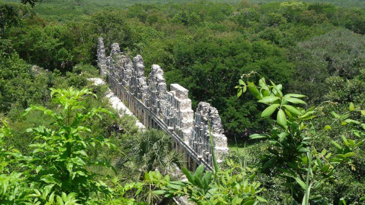Ecosystème | Quel type de végétation trouve-t-on au Mexique ?