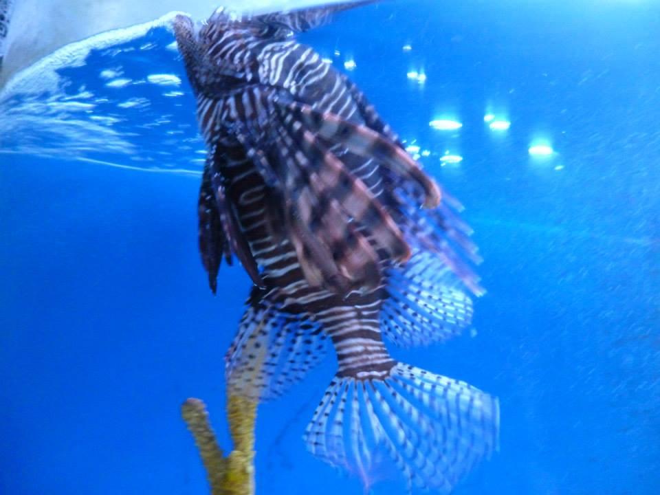 Aquarium du zoo de Guadalajara