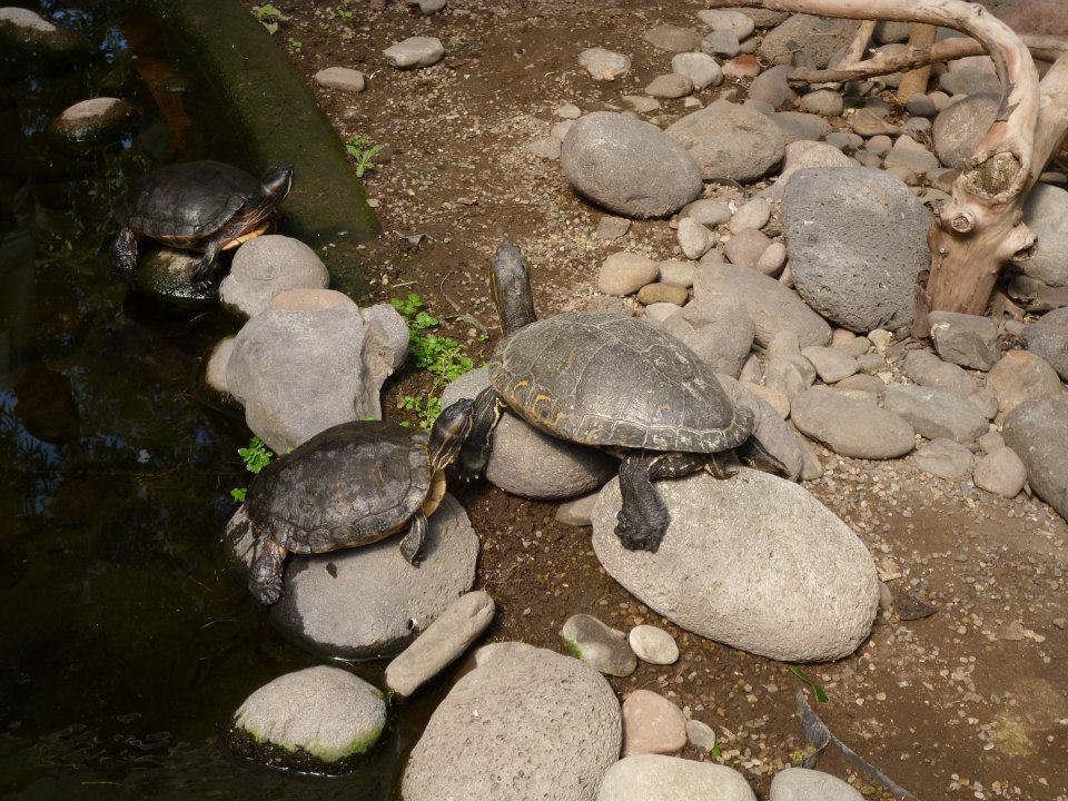 Herpetarium tortues zoo de Guadalajara