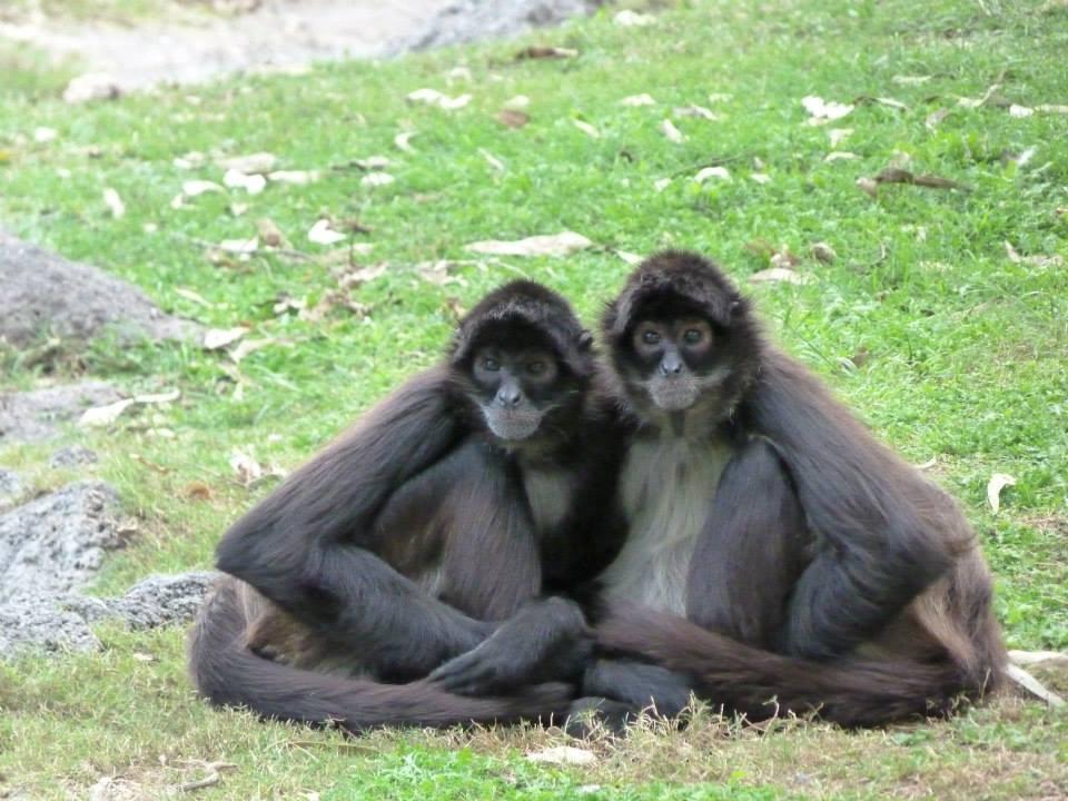 Monkeyland du zoo de Guadalajara