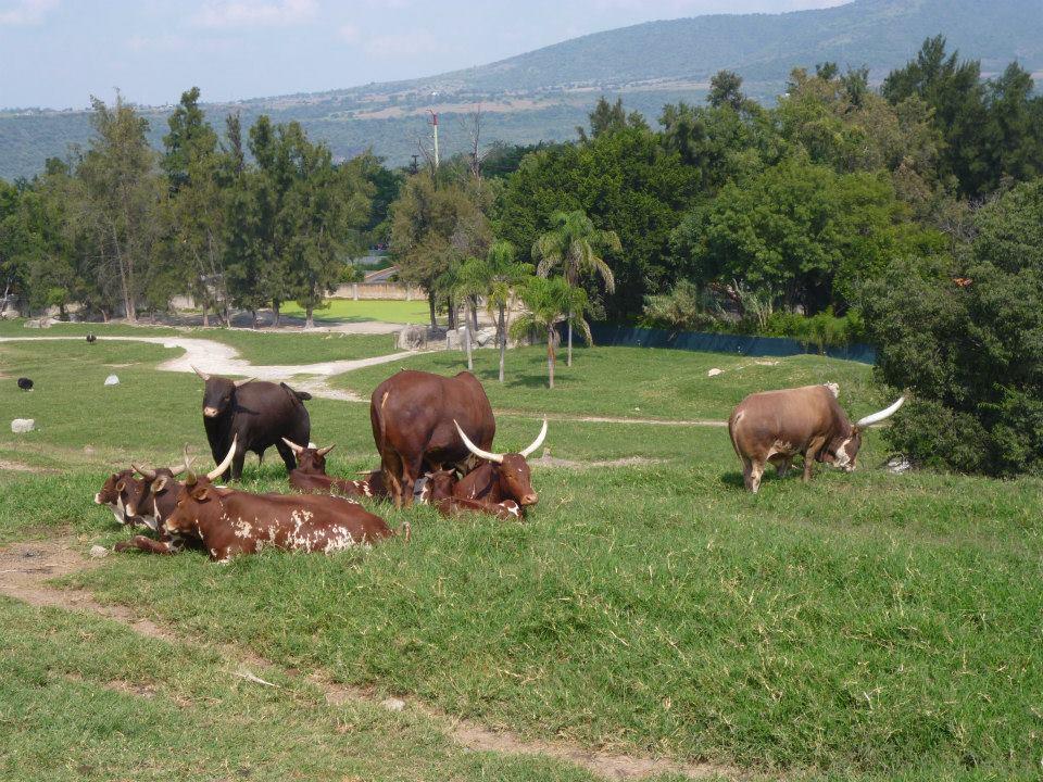 Safari dans le Masai Mara zoo de Guadalajara