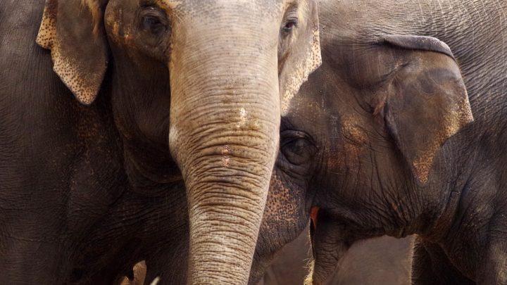 Le zoo de Guadalajara | Top 10 des attractions