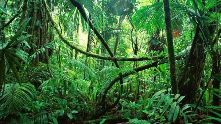 La jungle du Mexique
