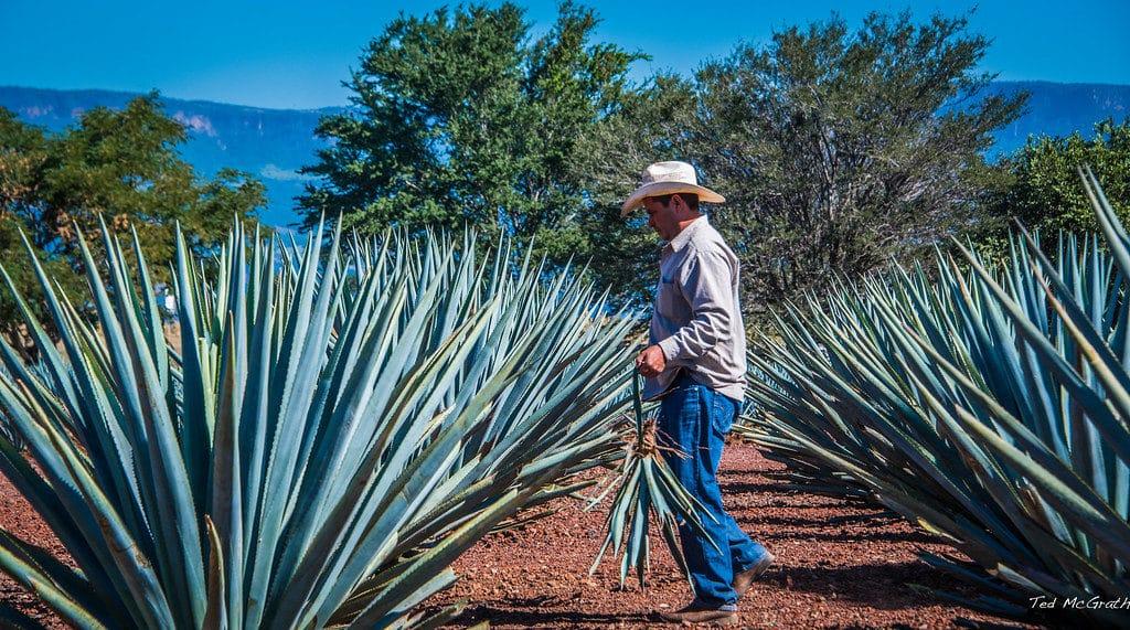 Tequila au Mexique
